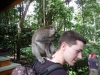 Ubud  - Monkey Forest : singe